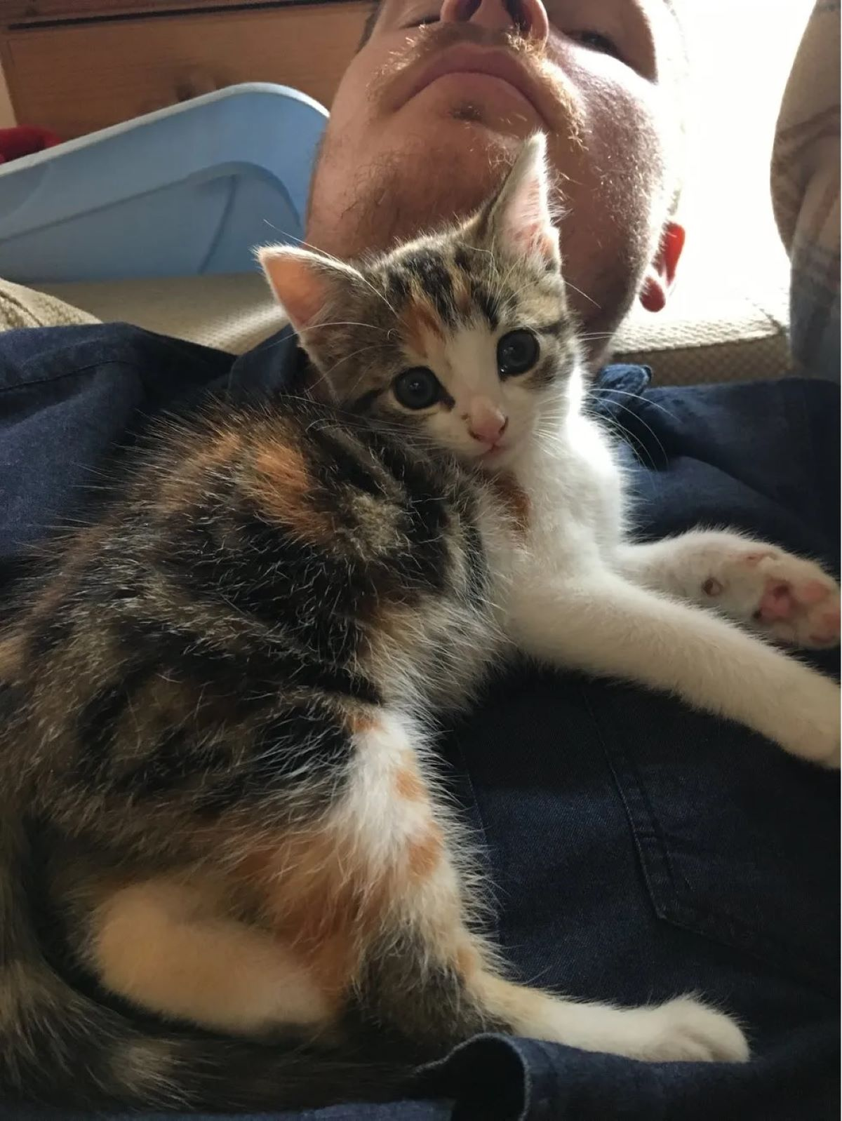 gattina-in-grembo