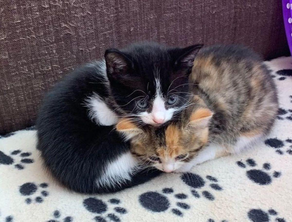 gattini-insieme