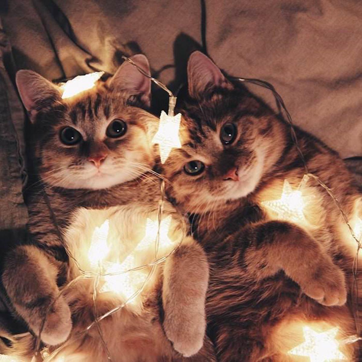 gattini-con-luci