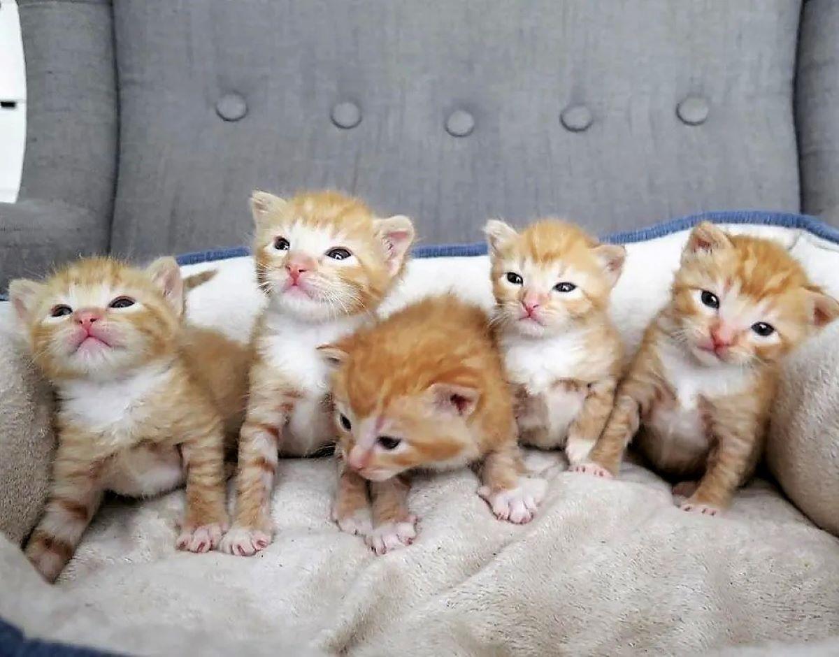 cinque-gattini