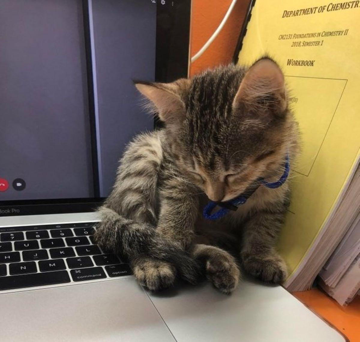 gattino-al-computer