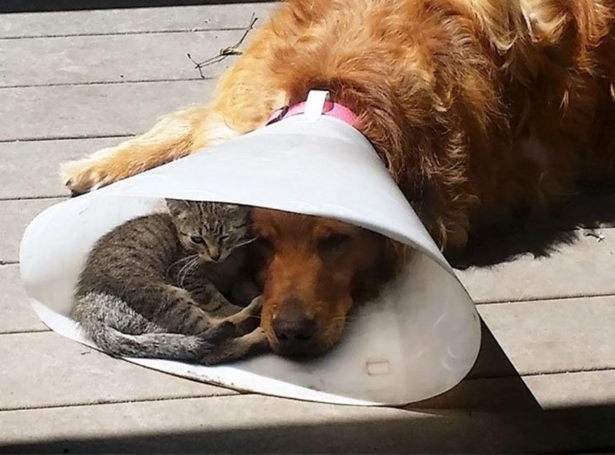 gatto-prende-il-sole