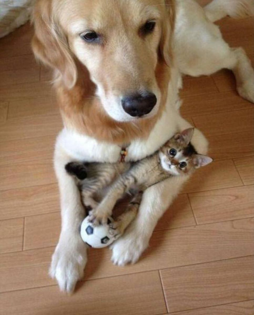 gattino-e-cane