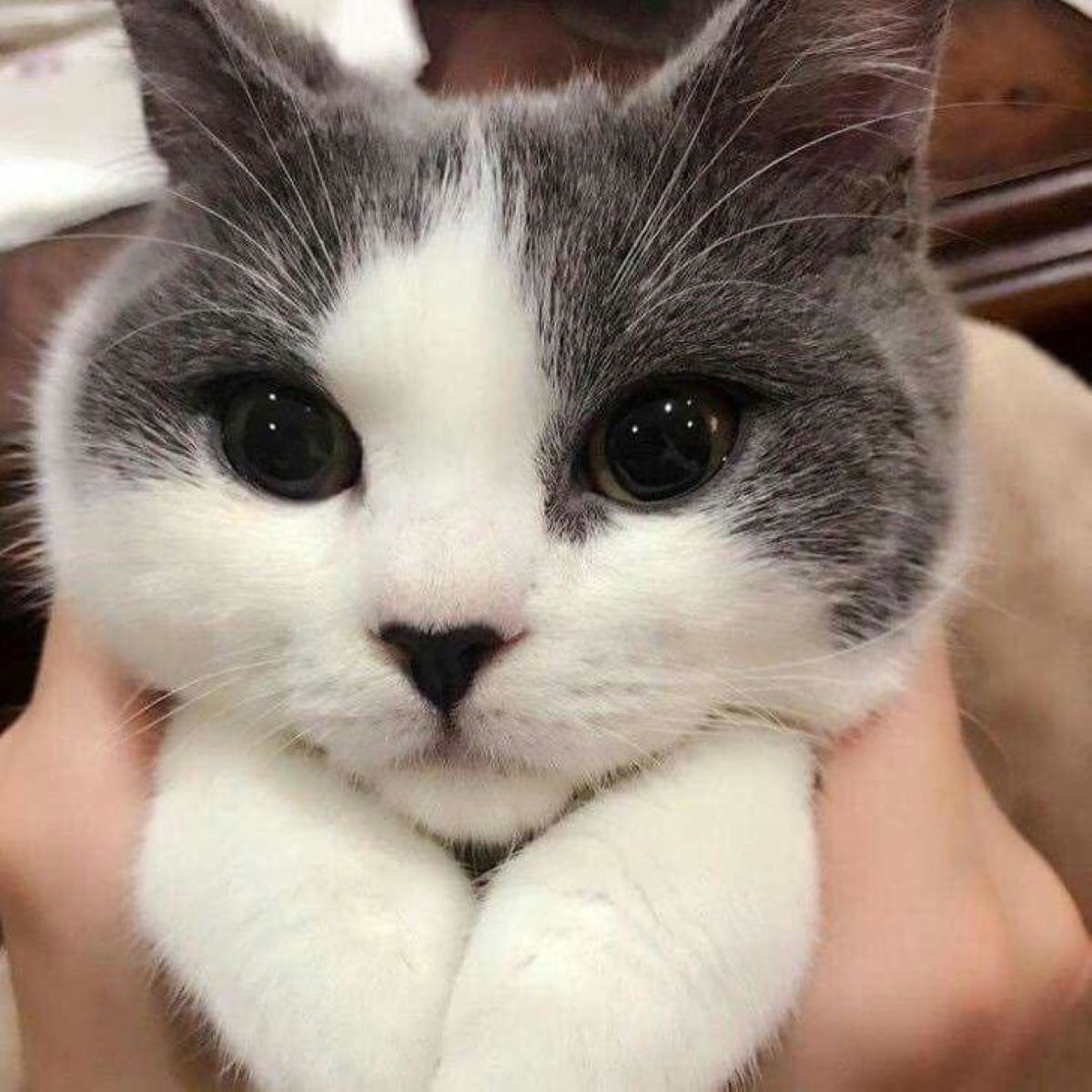 gattino-in-primo-piano