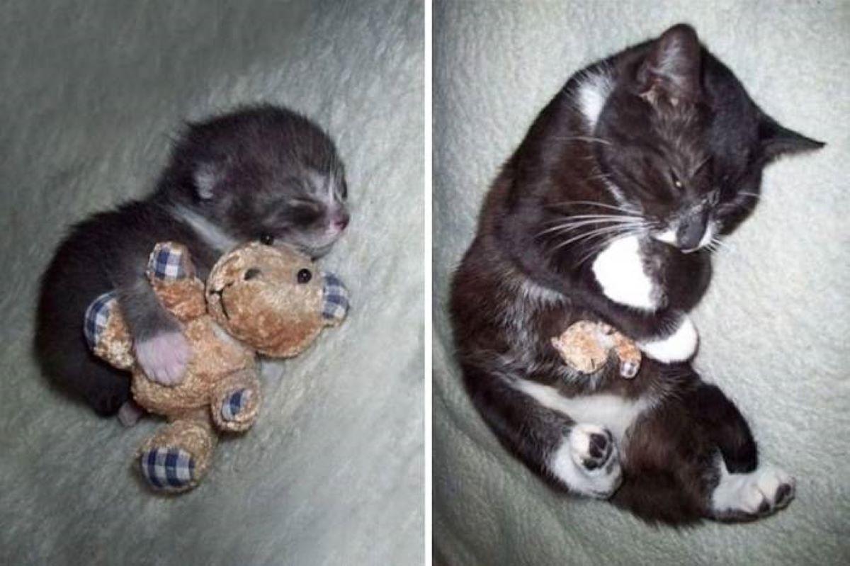 gattino-con-pupazzo-piccolo