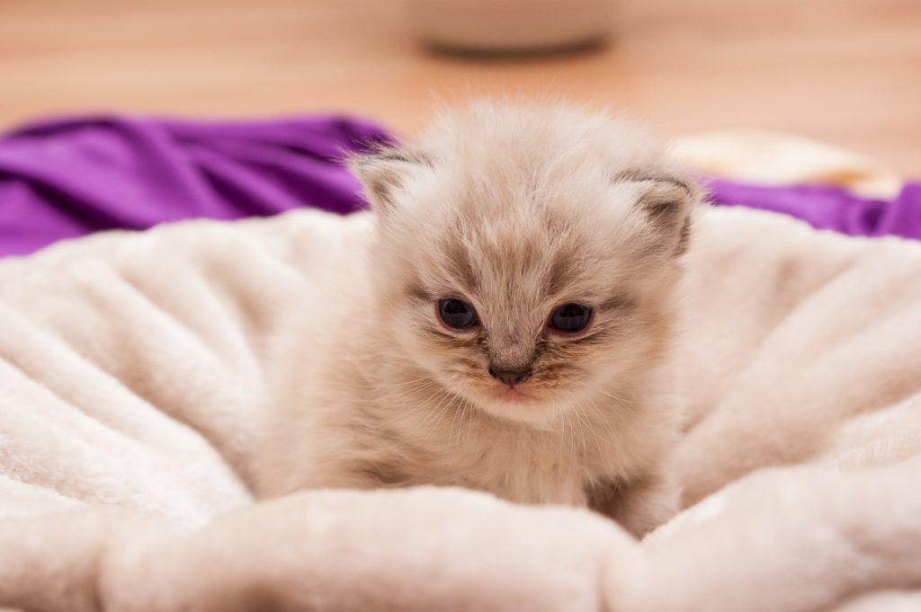 un gattino piccolo