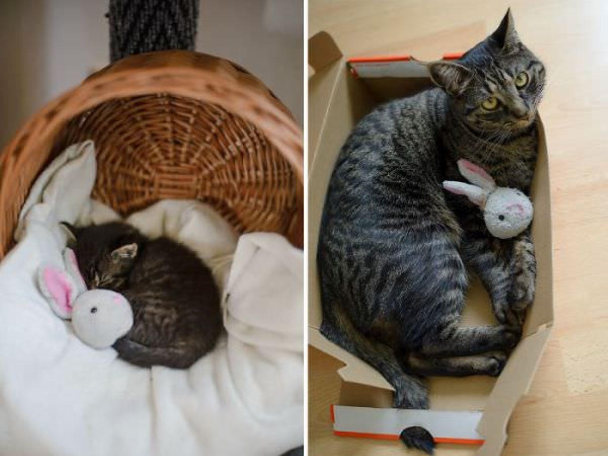 gatto-grande-e-piccolo-con-gioco