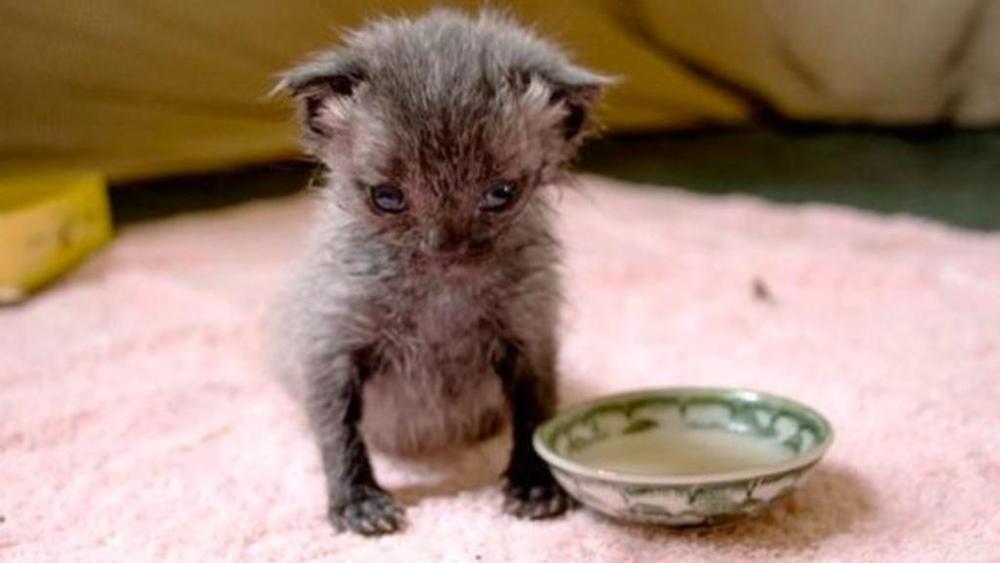 bruce-gattino-salvo-per-miracolo