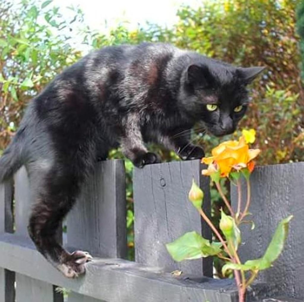 gatto-salvo-per-miracolo-cresciuto