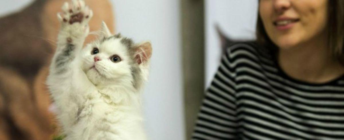 gatto-che-alza-la-mano