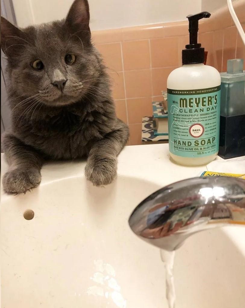 gatto-sul-lavandino