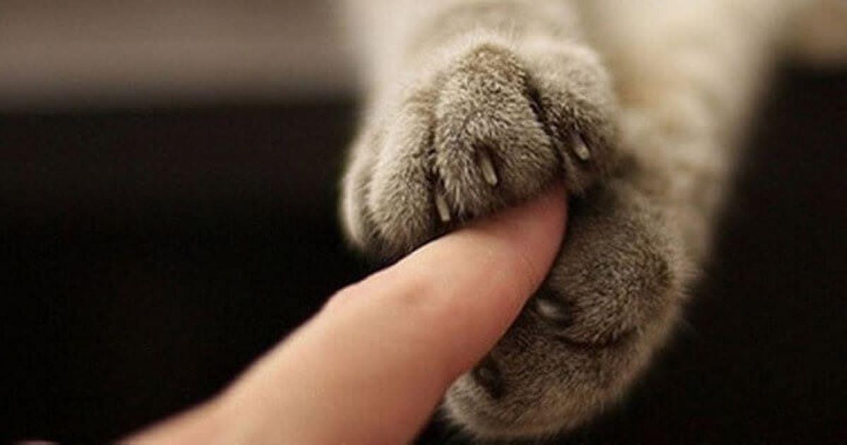 gatto-prende-dito