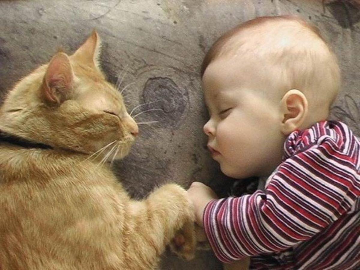 gatto-disteso-con-bambino