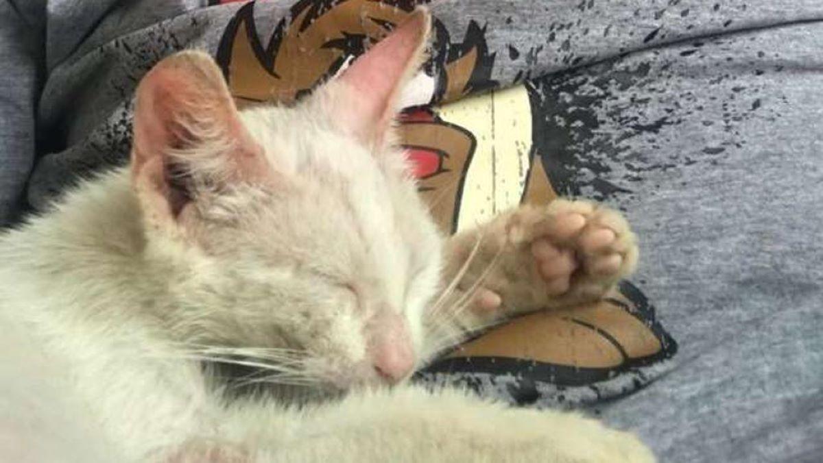 gatto-che-fa-un-sonnellino