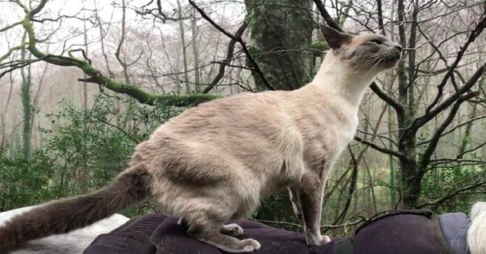 gatto-che-sussura-al-cavallo