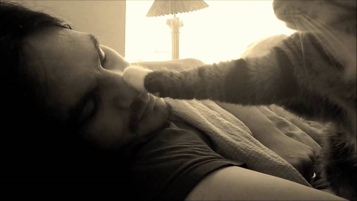 gatto-che-tenta-di-svegliare-il-proprietario