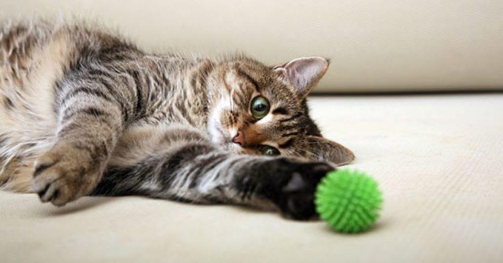 gatto-che-gioca