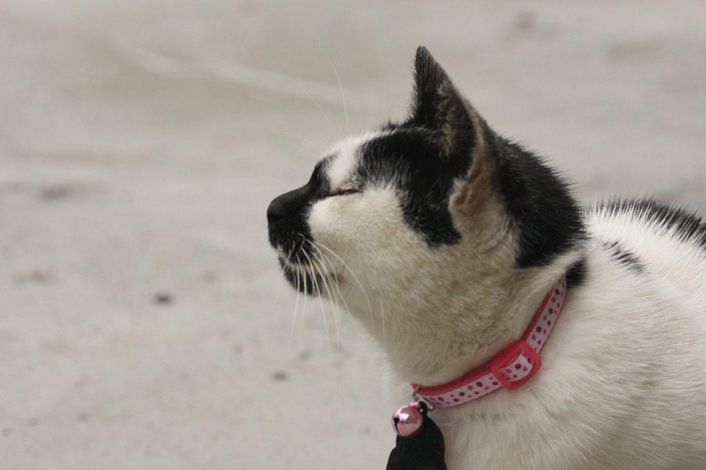 collarino per gatti