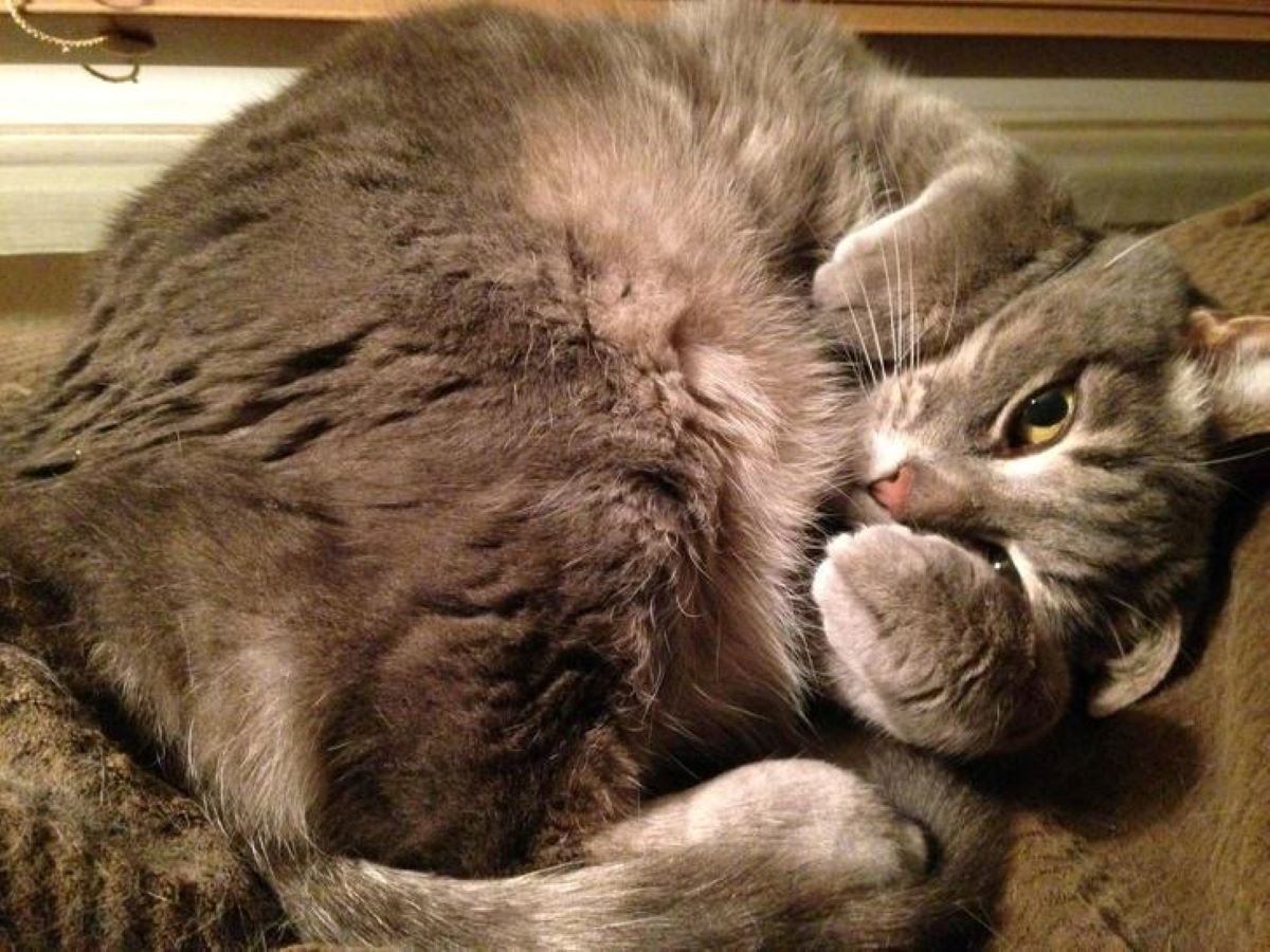gatto-arrotolato-su-se-stesso