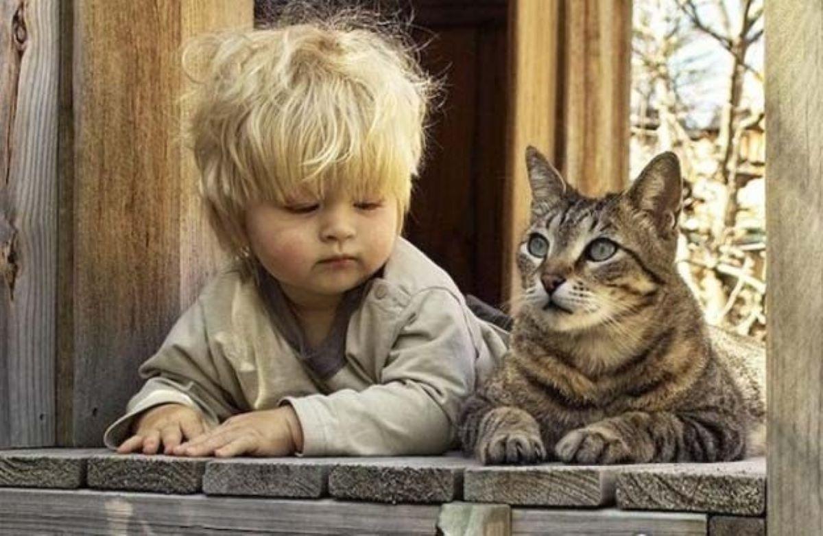 gatto-con-bambino-alla-finestra