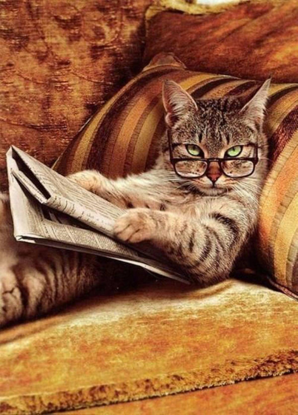 gatto-che-legge