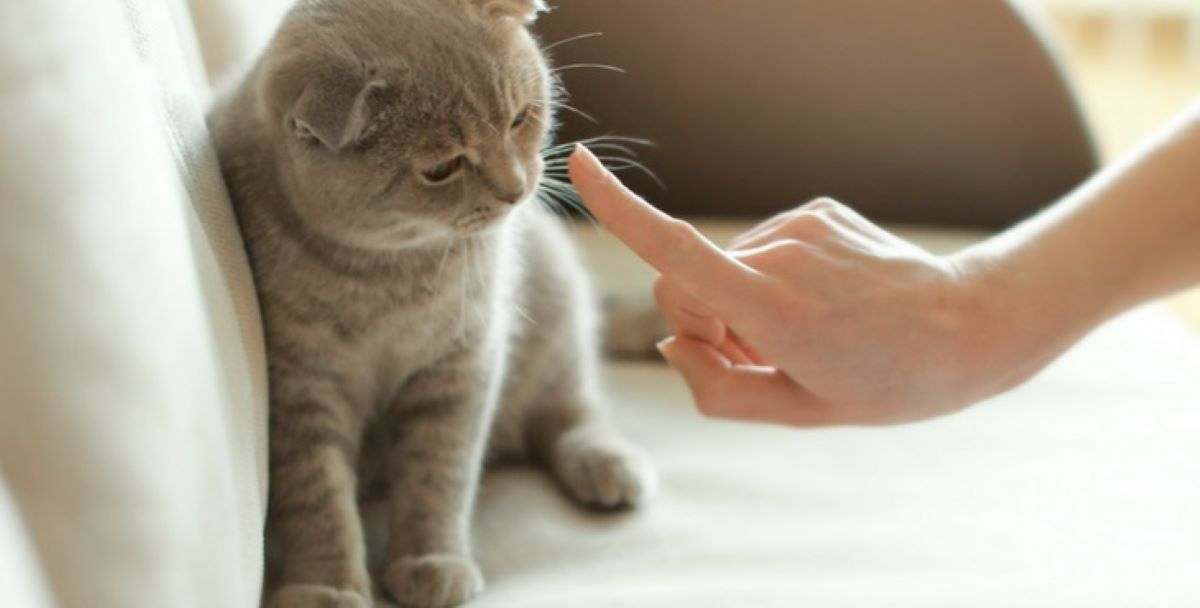 gatto-che-viene-sgridato