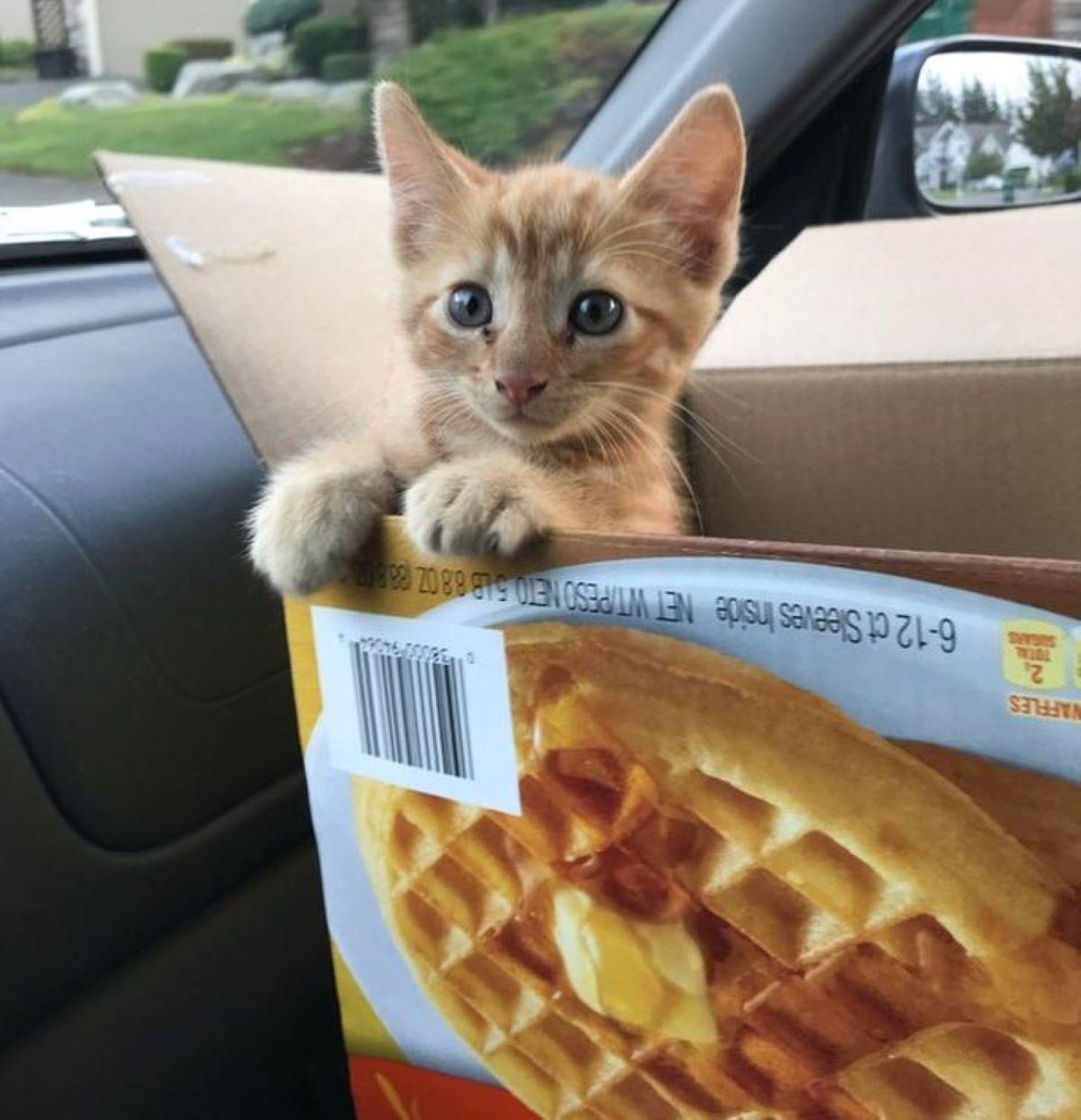 gatto-dentro-alla-scatola