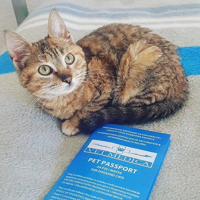 gatto-con-il-passaporto