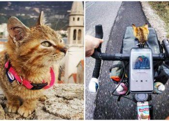 gatto-gira-il-mondo-in-bicicletta