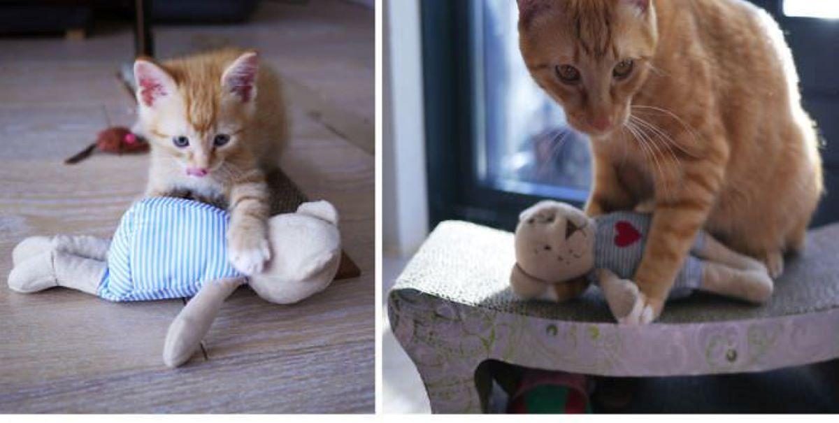 gatto-con-giochino