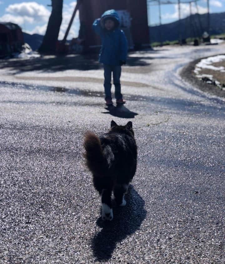 gatto-segue-la-bambina