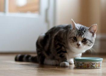 gattino per terra con ciotola