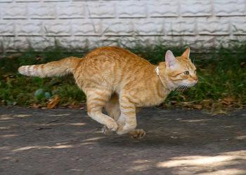 gatto-iperattivo