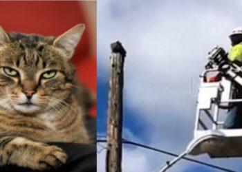 il-gatto-momma-salvato-da-un-operaio-che-viene-sospeso-dal-lavoro