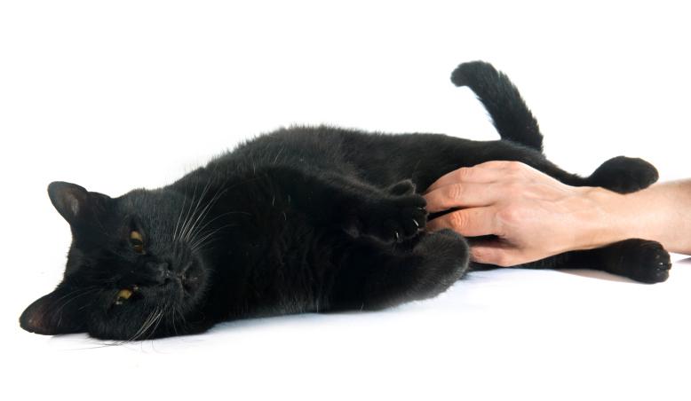 gatto-nero-coccole