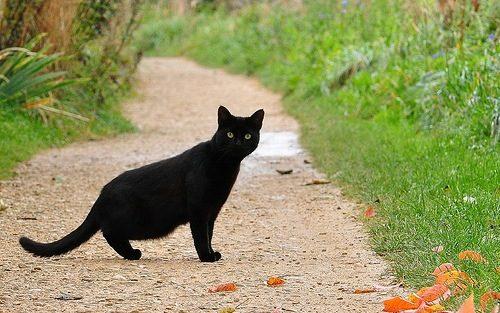 gatto-nero-sulla-strada