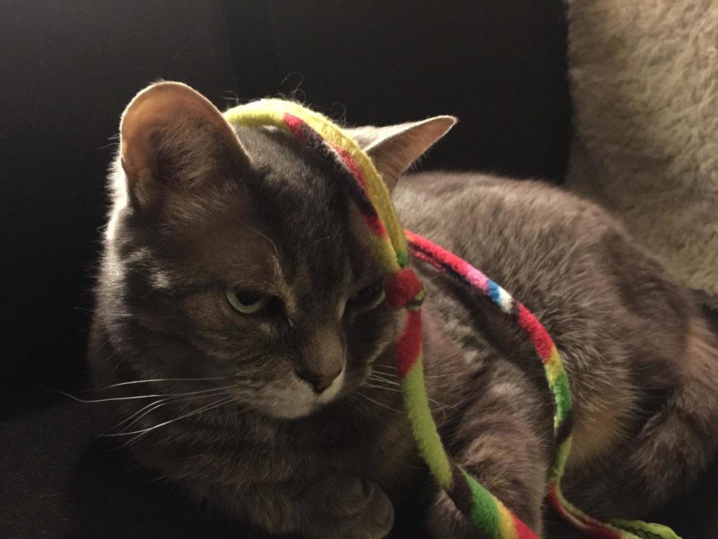gatto che non gioca