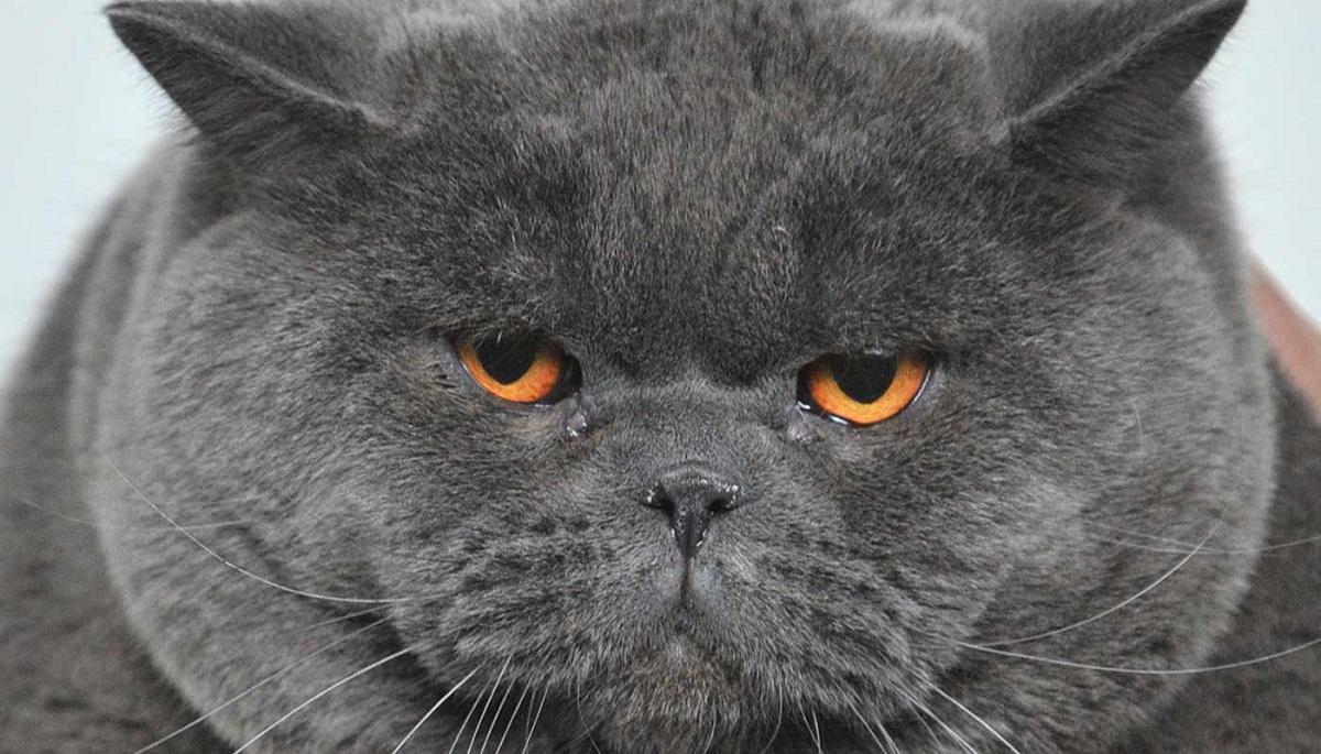 Gatto Obeso Cosa Fare Il Mio Gatto è Leggenda