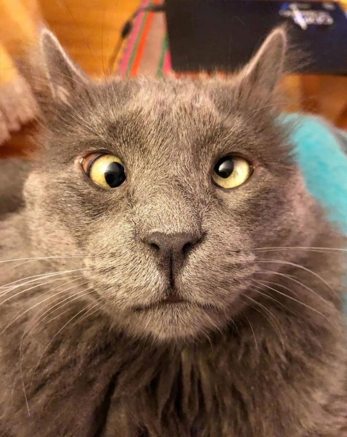 gatto-occhi-strabici