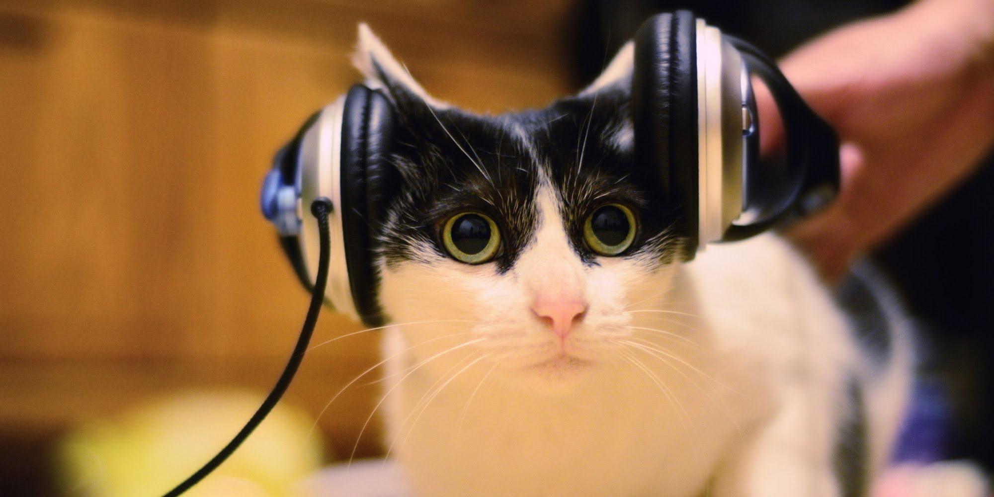 gatto-con-cuffie