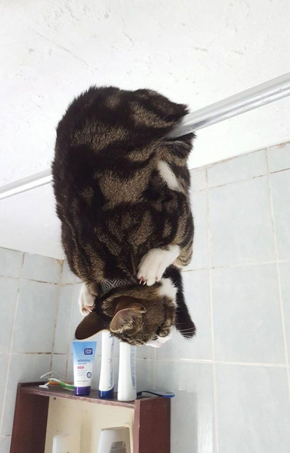 gatto-in-bagno