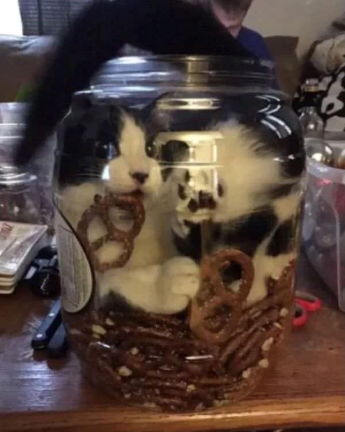 gatto-o-nel-vaso