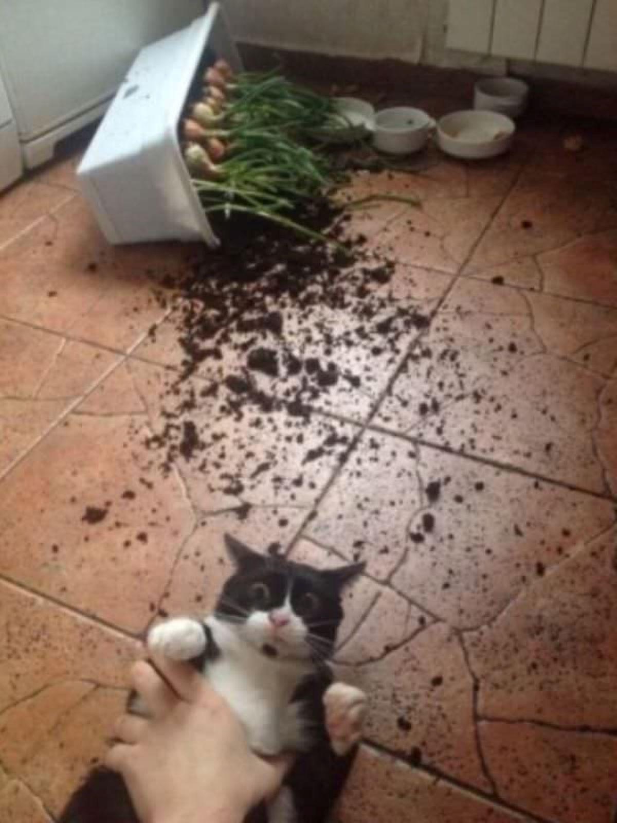 gatto-con-vaso-rovesciato