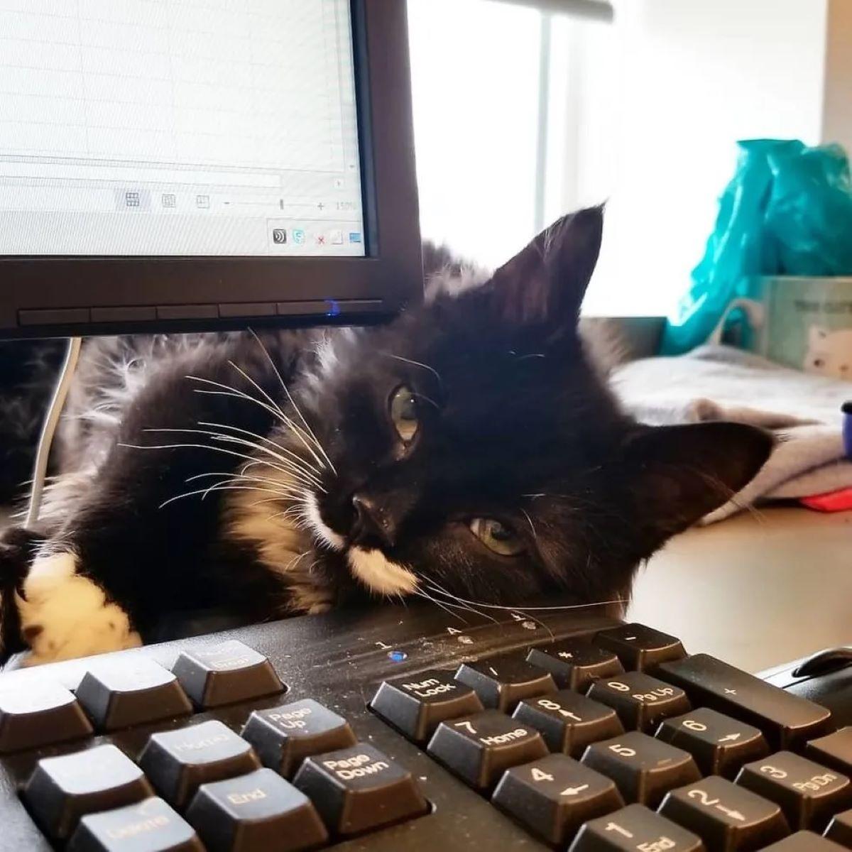 gatto-al-computer