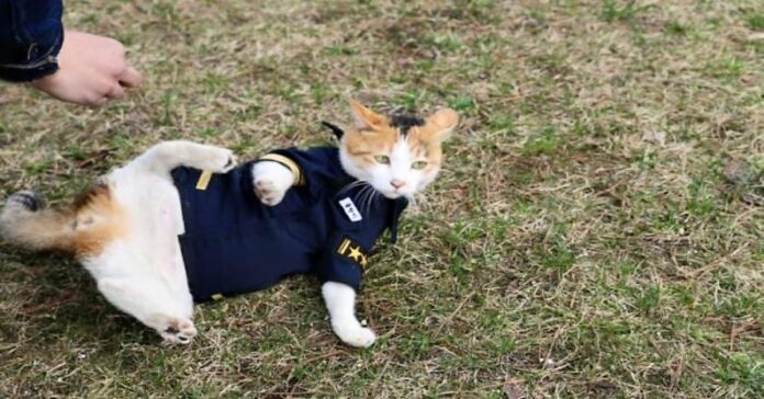 gatto-poliziotto-porta-a-casa-una-partita-di-droga