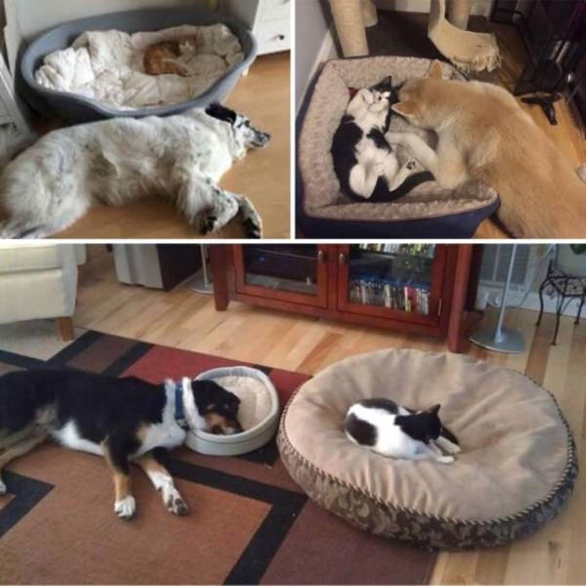 gatto-dominatore-dei-cani