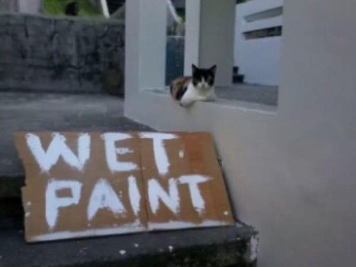 gatto-con-vernice-fresca