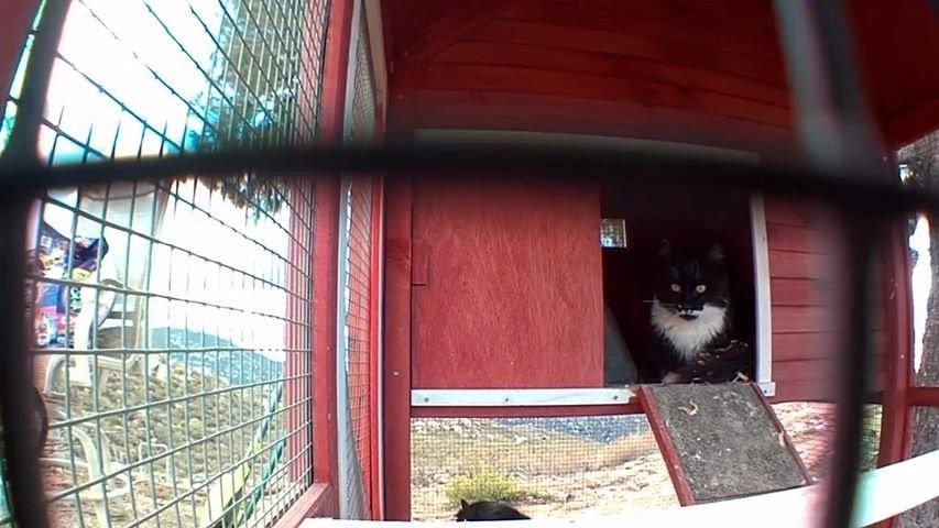 gatto-sorveglia-il-granaio