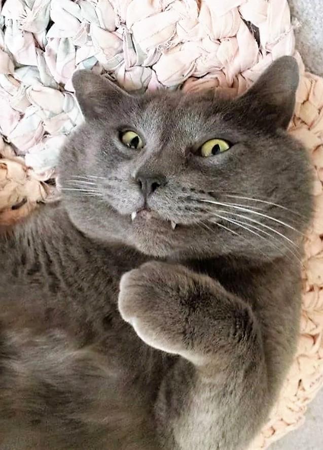 gatto-che-guarda