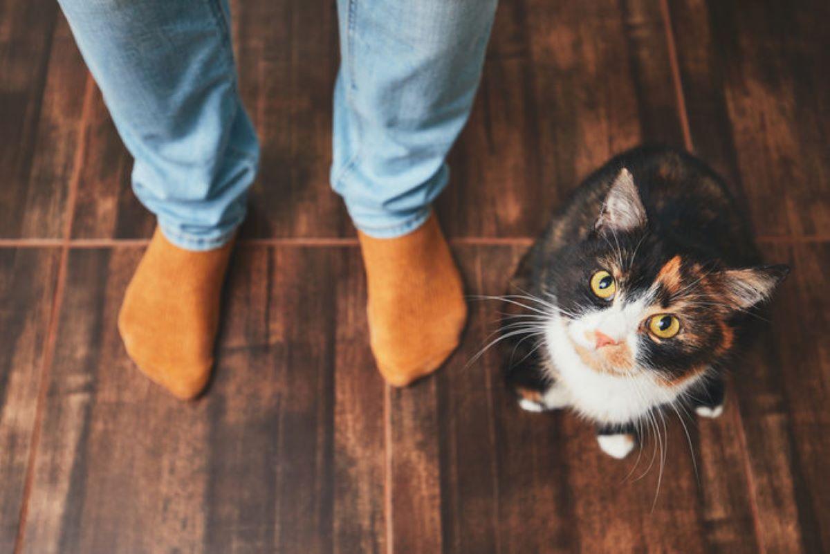 gatto-guarda-dall'alto-in-basso